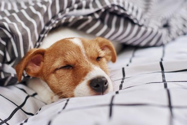 dificuldades para dormir