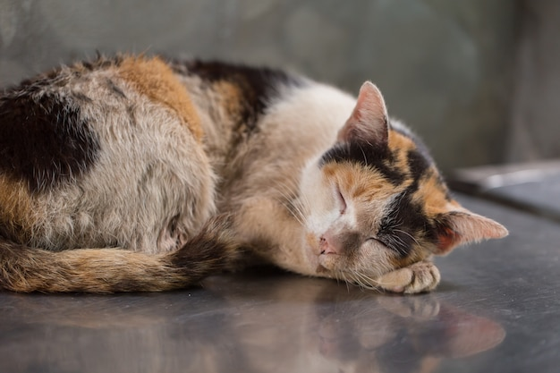 Sleeping kitten dirty homeless kitten starve stray cat dirty unclean market place. Premium Photo