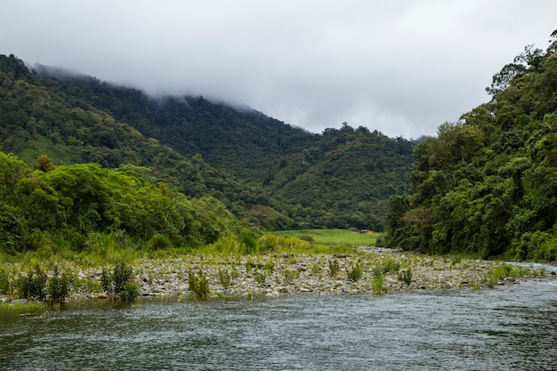 Slowly flowing river in tropical rainforest at costa rica Free Photo