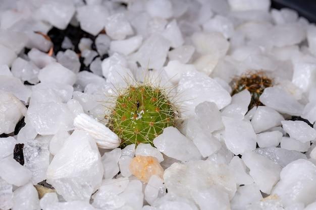 Маленький и красивый зеленый кактус из белых шипов с выборочным фокусом Premium Фотографии