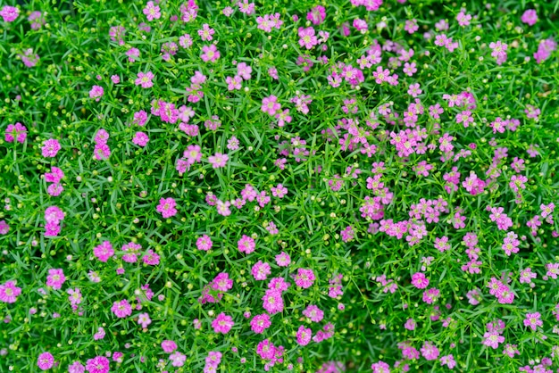 Small beautiful flowers in the summer in the field Premium Photo