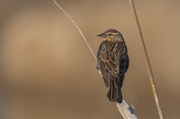 Маленькая птичка сидит на ветке Бесплатные Фотографии