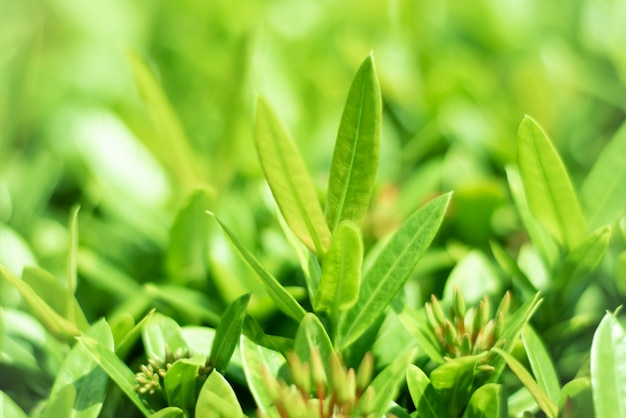 Small branches are growing with business. Premium Photo