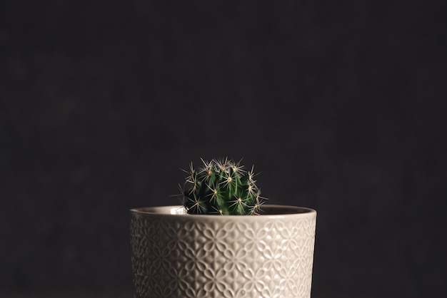 Small cactus in a flowerpot on a pink background Premium Photo