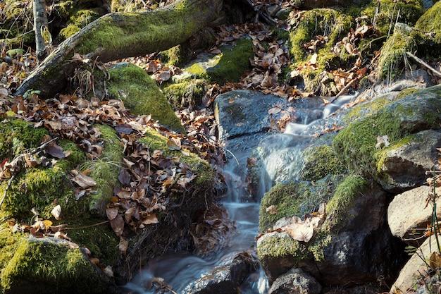 Небольшой каскад в осеннем сезоне красит в лесу камни и деревья, покрытые мхом Premium Фотографии