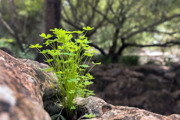 Small cluster of vegetation in the forest Premium Photo