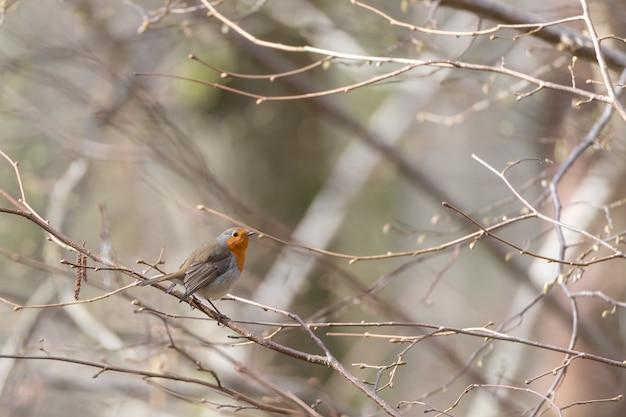 Маленькая милая птичка сидит на ветке дерева Бесплатные Фотографии