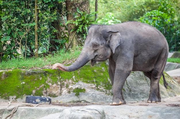 Small cute elephant Premium Photo