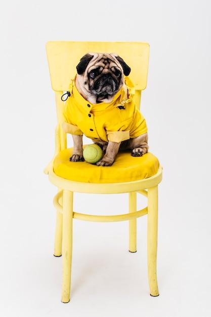 椅子に座っている黄色い服の小型犬 Premium写真