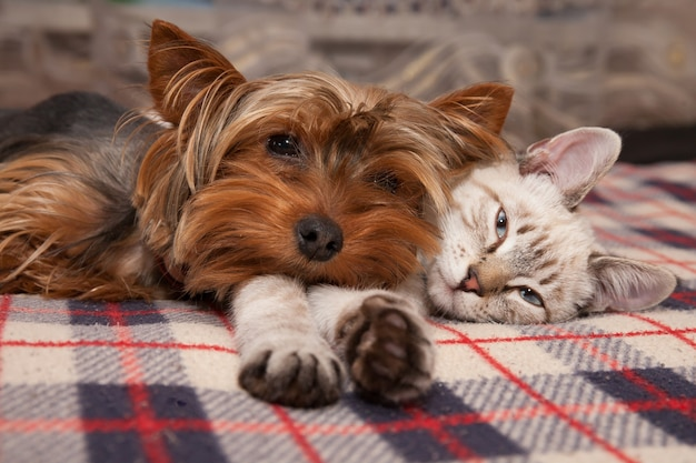 A small dog and a kitten lie at home, looking at the lens Premium Photo