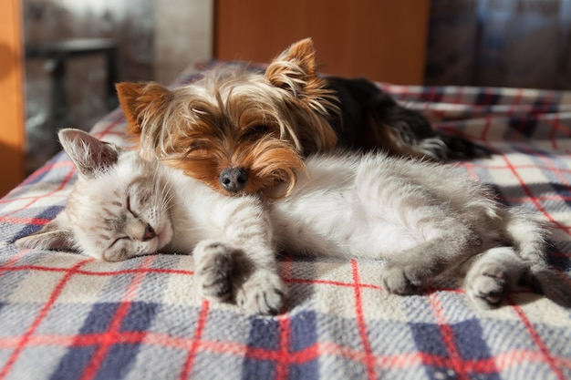 A small dog and a kitten sleep at home Premium Photo