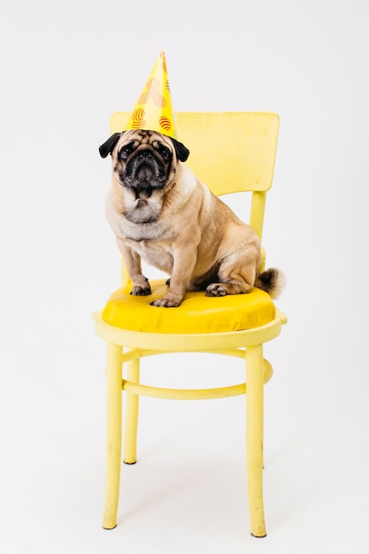 Small dog in party hat sitting on chair Free Photo