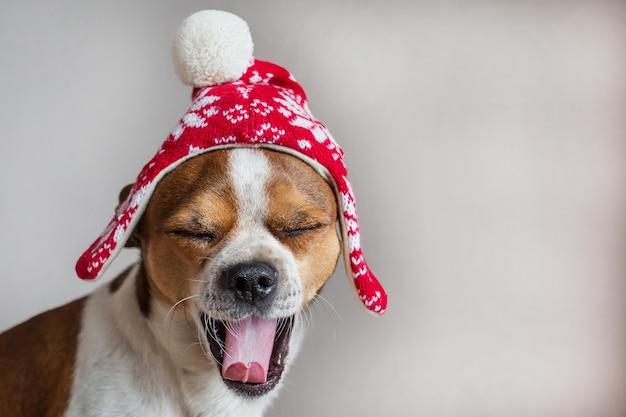 Маленькая собака портрет в зимней рождественской шапке с открытым ртом и закрытыми глазами Premium Фотографии