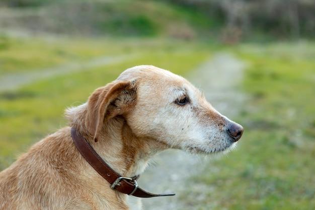 Small dog with collar Premium Photo