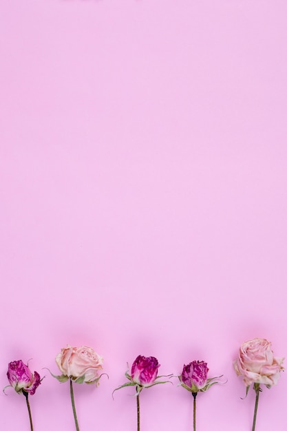 Small dry roses on pastel pink background, Premium Photo