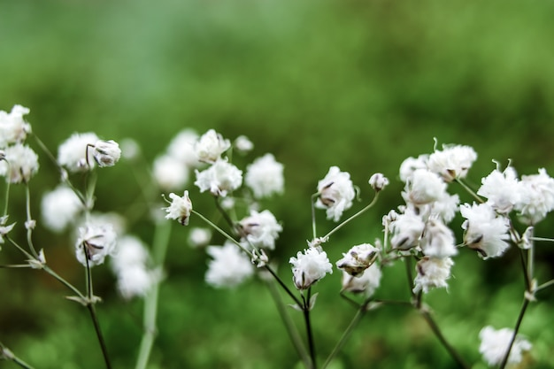 Small flowers on a gentle background in the open air Premium Photo