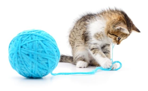 小さな面白い子猫とスレッドのクルーが分離されました Premium写真