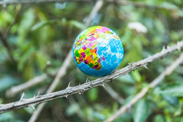 Small globe on branch of tree Free Photo