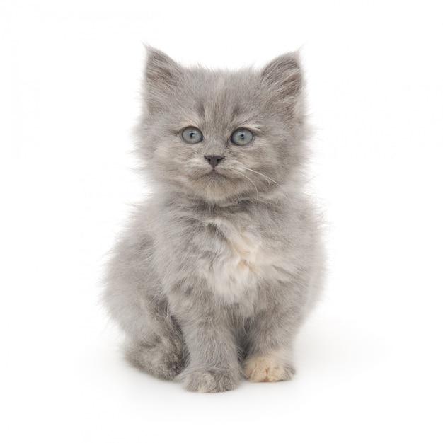 Small gray kitten on a white Premium Photo