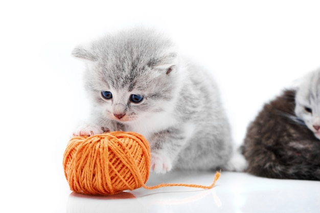Small grey adorable kitten playing with orange ball with kitties are playing in white phot Premium Photo