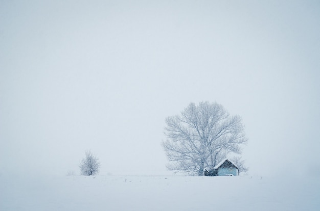 Small hut in front of the big tree covered with snow on a foggy winter day Free Photo