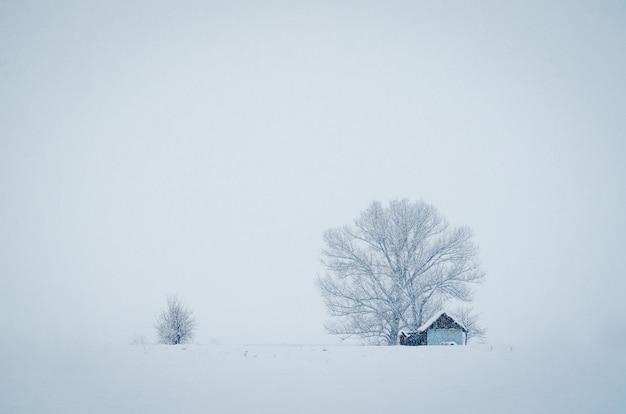 안개가 자욱한 겨울 날 눈으로 덮여 큰 나무 앞의 작은 오두막 무료 사진