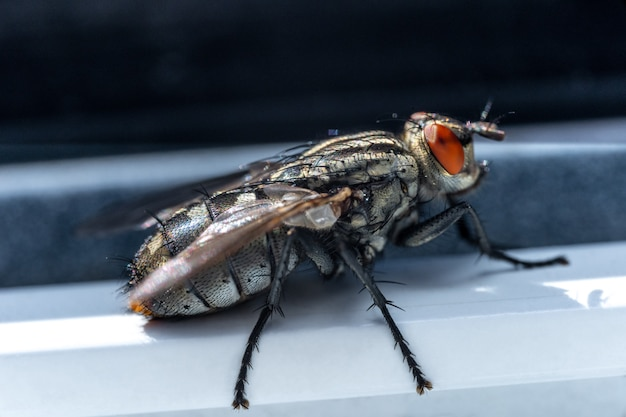 Small insects in macro photography. fly Premium Photo