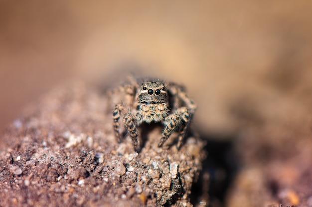 Piccolo ragno di salto nel giardino, fine in su. Foto Gratuite