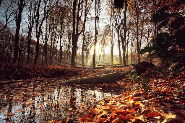 Небольшое озеро, окруженное листьями и деревьями под солнечным светом в лесу осенью Бесплатные Фотографии
