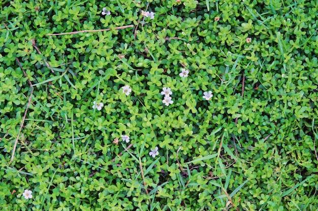 小さな葉と花の背景テクスチャ Premium写真