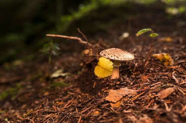 Small mushroom in the forest Free Photo