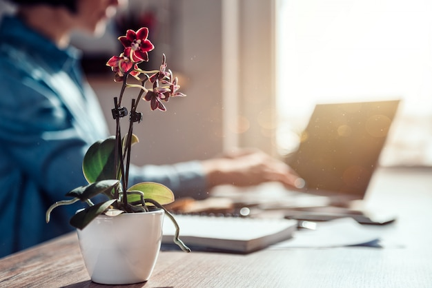 Small orchid at office desk Premium Photo