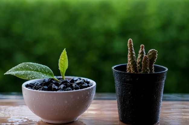 小さな植物とサボテン Premium写真