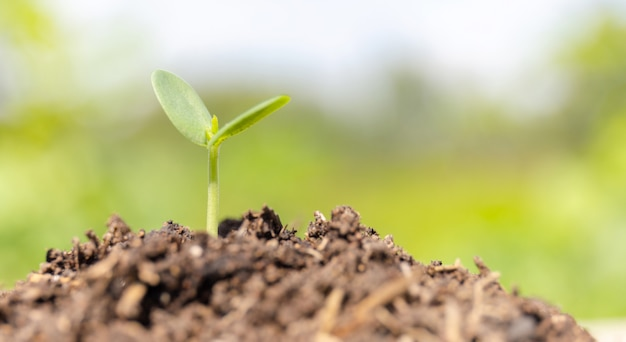 Small plant growing in the ground with blurred background Premium Photo