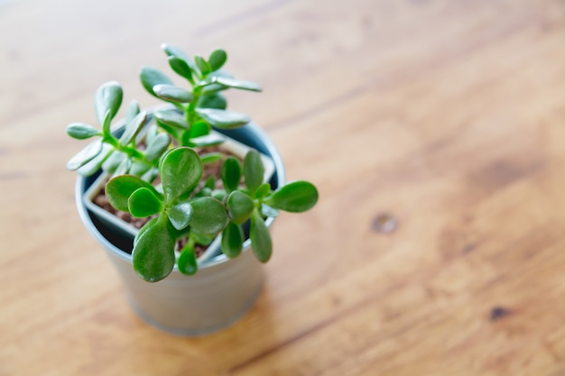 Small plant in a metal pot Free Photo