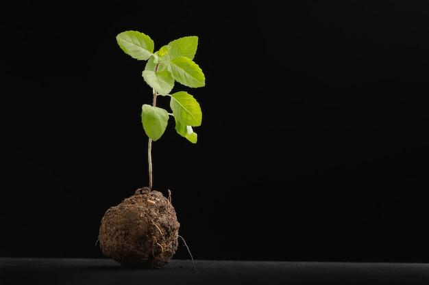 黒の小さな植物 Premium写真