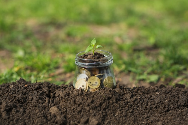 Small plant with coins Free Photo