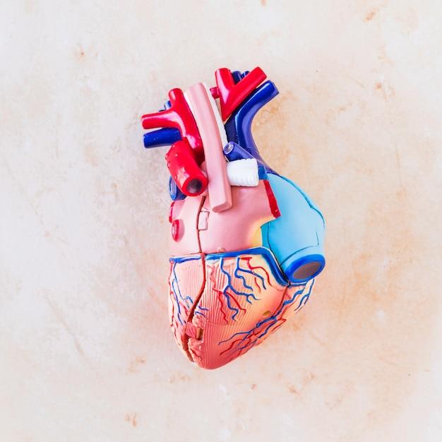 Small plastic human heart on light table Free Photo