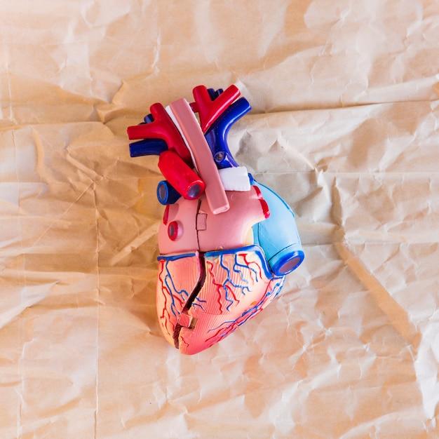 Piccolo cuore umano in plastica su carta Foto Gratuite