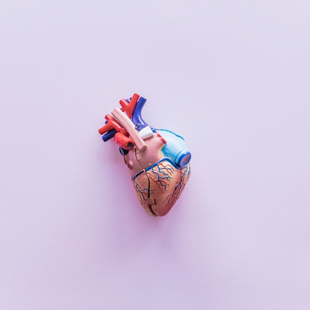 Small plastic human heart on table Free Photo