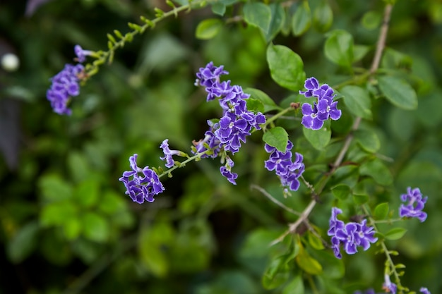 Small purple flowers with bright green leaves Photo