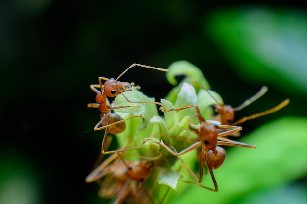 Small red ant on tree Premium Photo