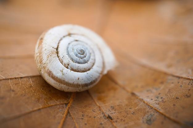 small-snail-garden_73485-782.jpg