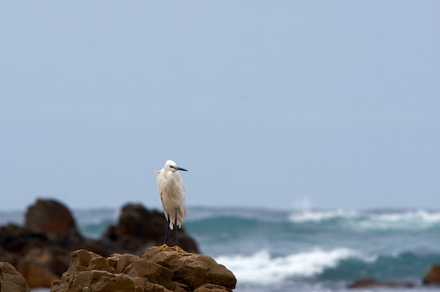 Small tired bird rests on the rocks of the sea coast without stopping Premium Photo