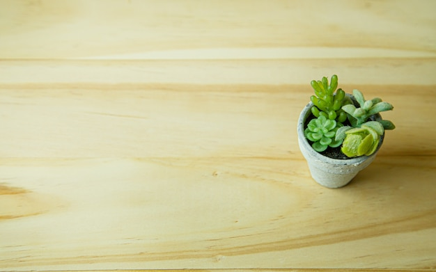 Small tree and white plant on wood table for background content. Premium Photo