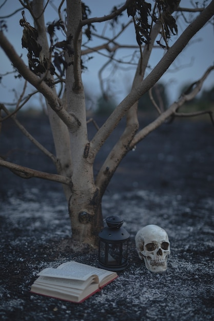 Small tree with spell book and skull for halloween night Free Photo
