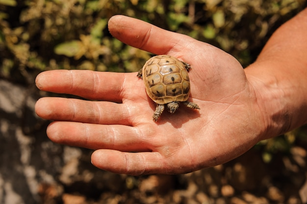 Small turtle in a hand of man Premium Photo