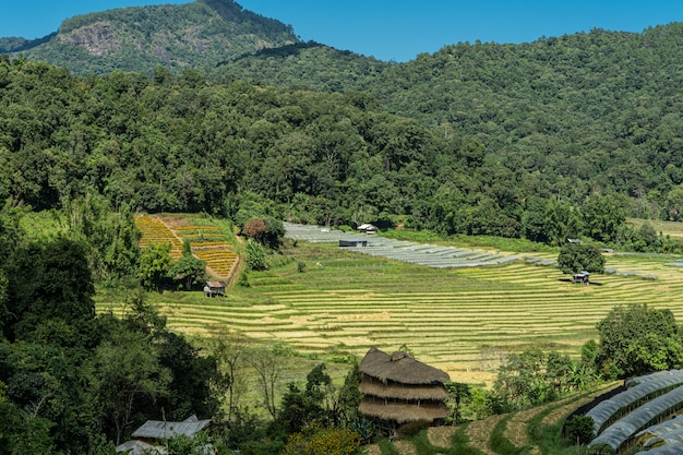 Small village in the middle of the jungle with terraced fields Premium Photo