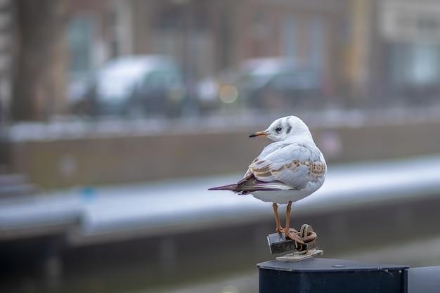 Piccolo uccello bianco in piedi su un pezzo di metallo durante il giorno Foto Gratuite