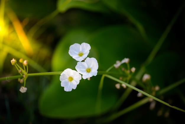 Small white flowers Premium Photo
